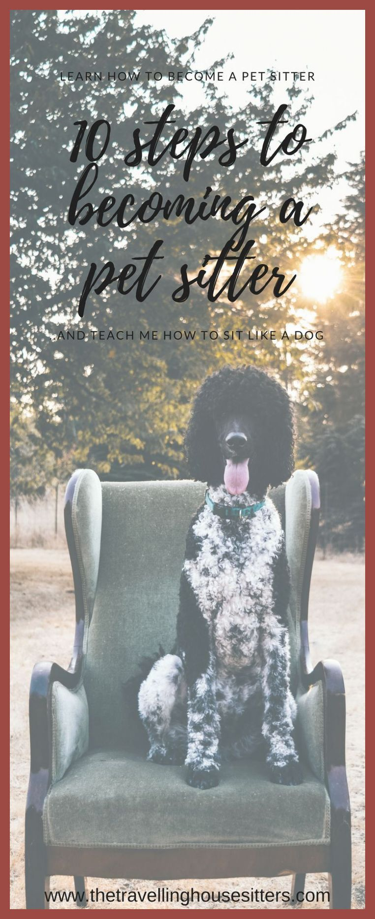 Dog sitting solutions for when youre away dog sitting