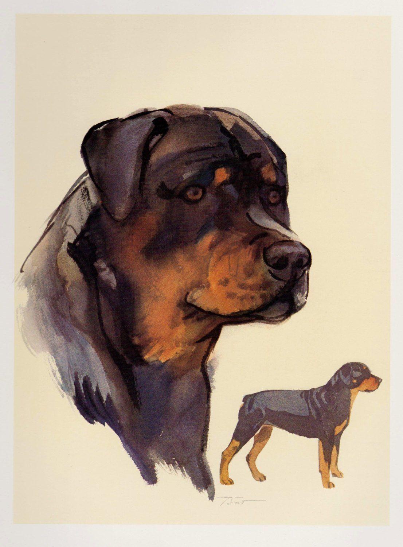 Vintage Rottweiler Dog Print Vintage Dog Art Cottage Home Decor