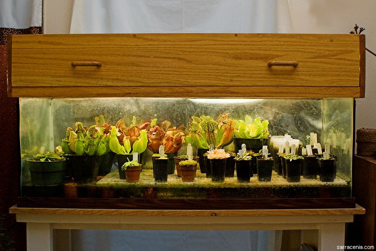 greenhouse style carnivorous plant terrarium. Black Bedroom Furniture Sets. Home Design Ideas