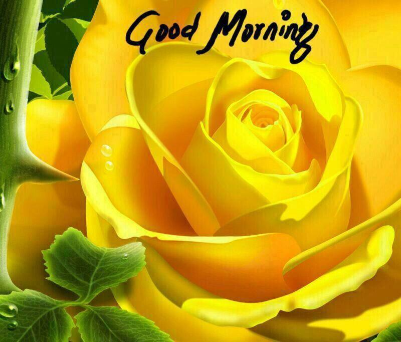 Pin By Ravi Sarawgi On Good Morning With Coffee Rose Flower Wallpaper Rose Wallpaper Yellow Roses Flower wallpaper good morning
