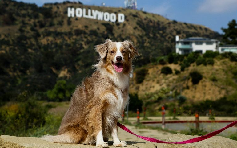 7 Fun Things To Do With Your Dog In Los Angeles Living In La