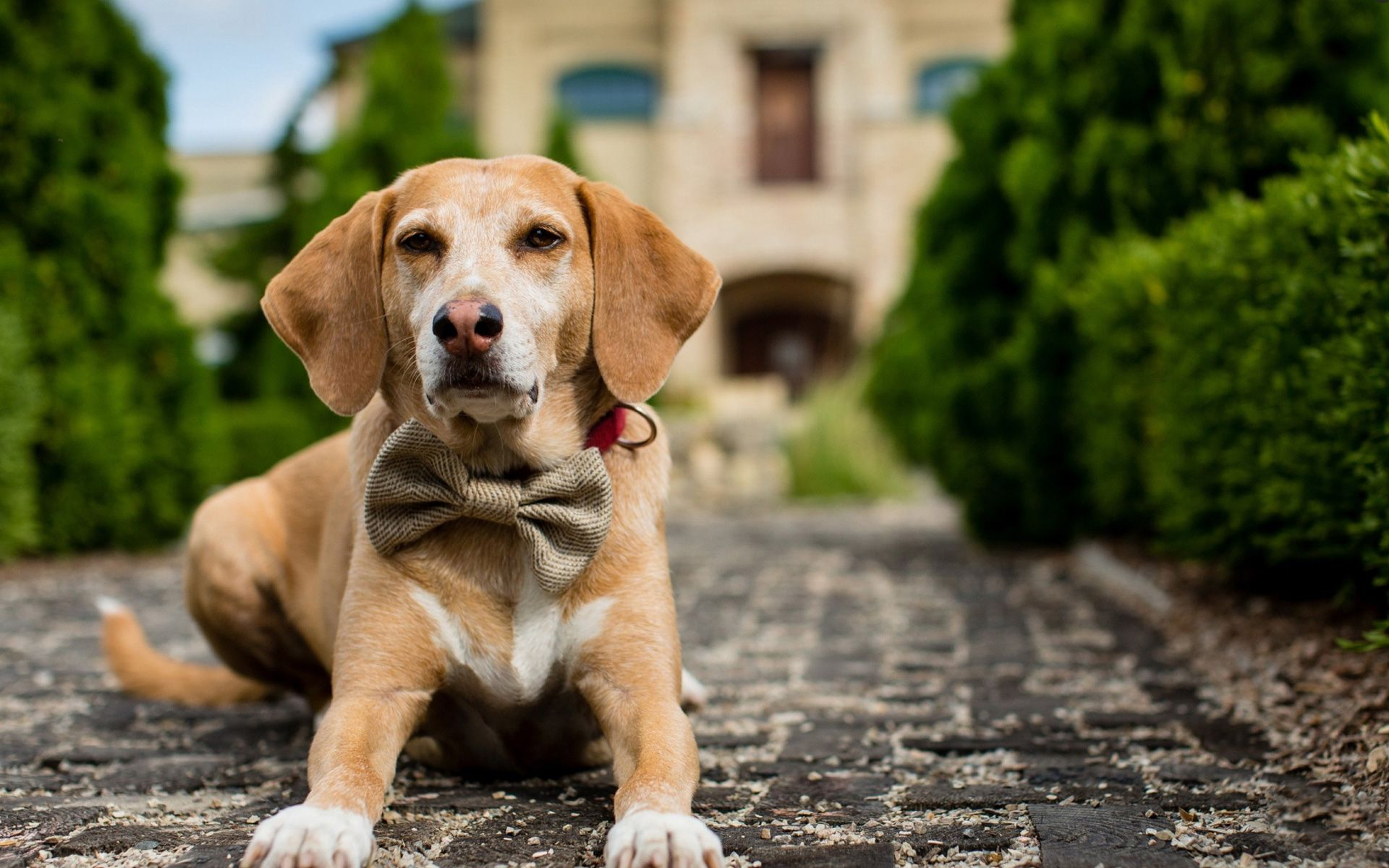 Dog Photography Images Free Download Hd Wallpapers Dogs Puppy Cute