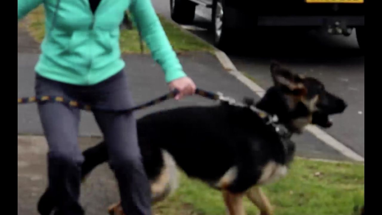 How To Stop Your Dog Barking Lunging At Visitors Dogs
