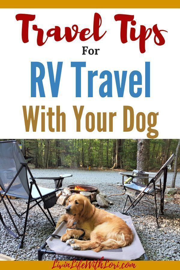RV Travel With Your Dog and What You Need To Know | Livin' Life With Lori #rvliving
