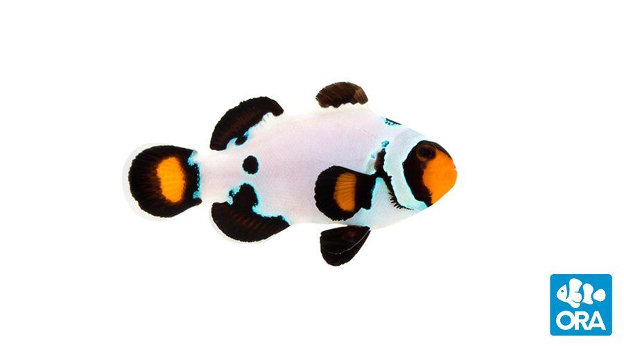 Pin Na Doske Marine Aquarium Idea