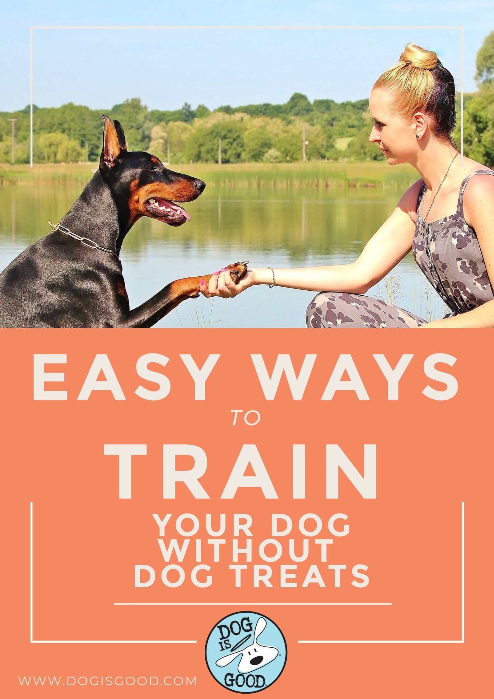 Easy Ways To Train Your Dog Without Food Treats Training Your