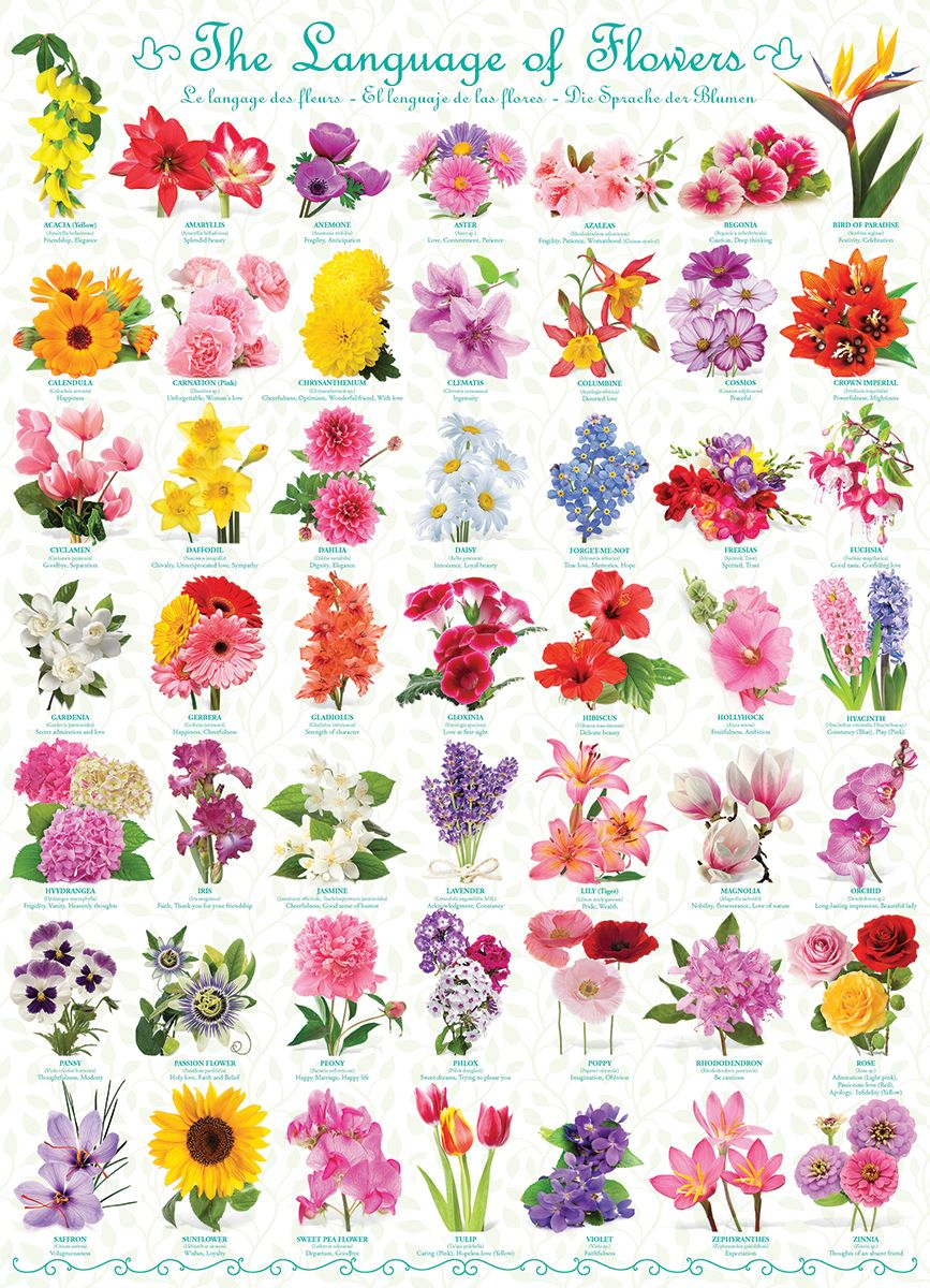 The Language Of Flowers 1000pc Jigsaw Puzzle By Eurographics Flower Types Chart Flower Meanings Language Of Flowers