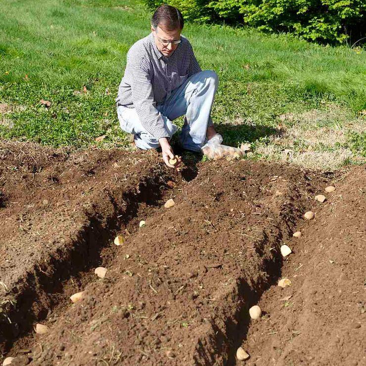 7 Ways To Grow Potatoes Planting Potatoes Veg Garden 640 x 480