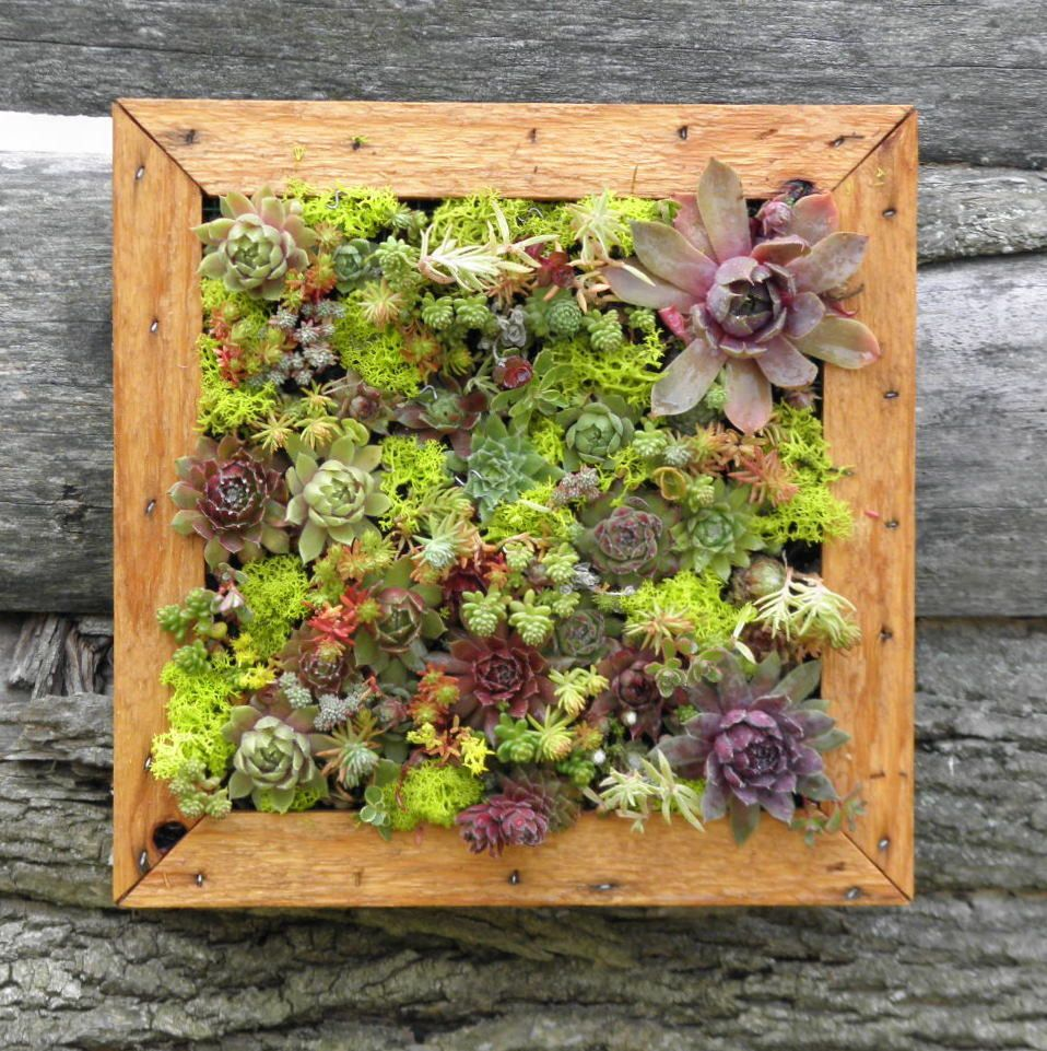 Two succulent living art picture frame kits diy by sosucculent two succulent living art picture frame kits diy by sosucculent jeuxipadfo Image collections