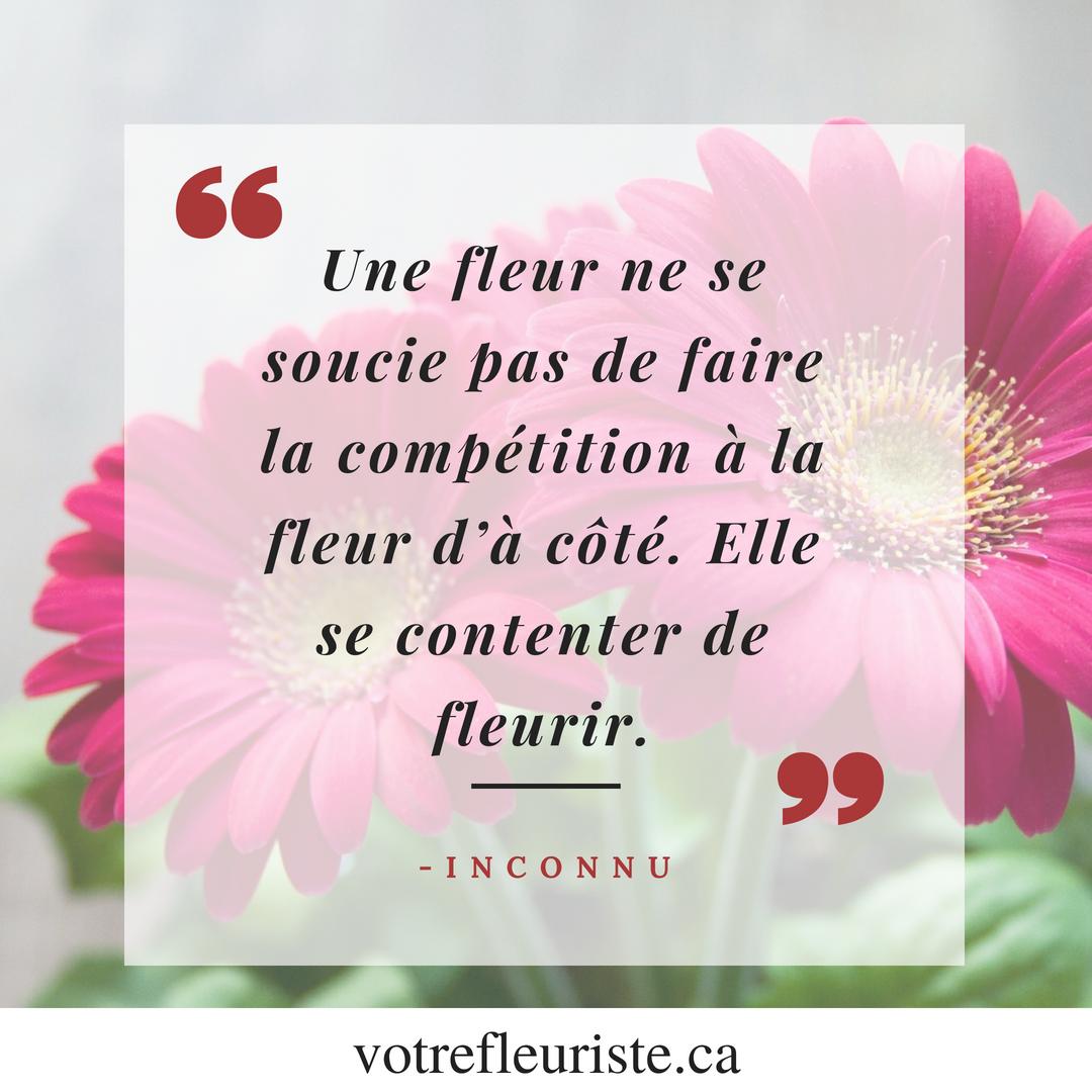 Une Fleur Ne Se Soucie Pas De Faire La Competition A La Fleur D A