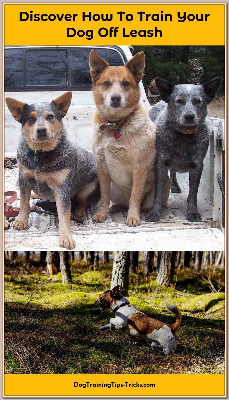 Dog Training Jumping Dogtrainingjumping Off Leash Dog Training
