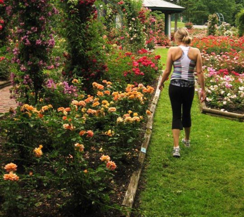 backyard rose garden in addition to backyard rose garden codxio sky designs ideas - Backyard Rose Garden