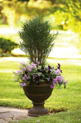 Pin By Love2stich On Garden Container Gardening Flower Pots Outdoor Outdoor Flowers