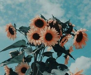 Image about blue in Flowers by m. j on We Heart It