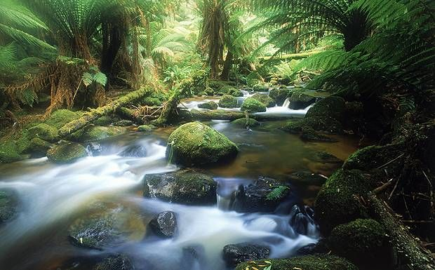 Tasmania features untamed rivers and pristine rainforests for adventurous types to explore