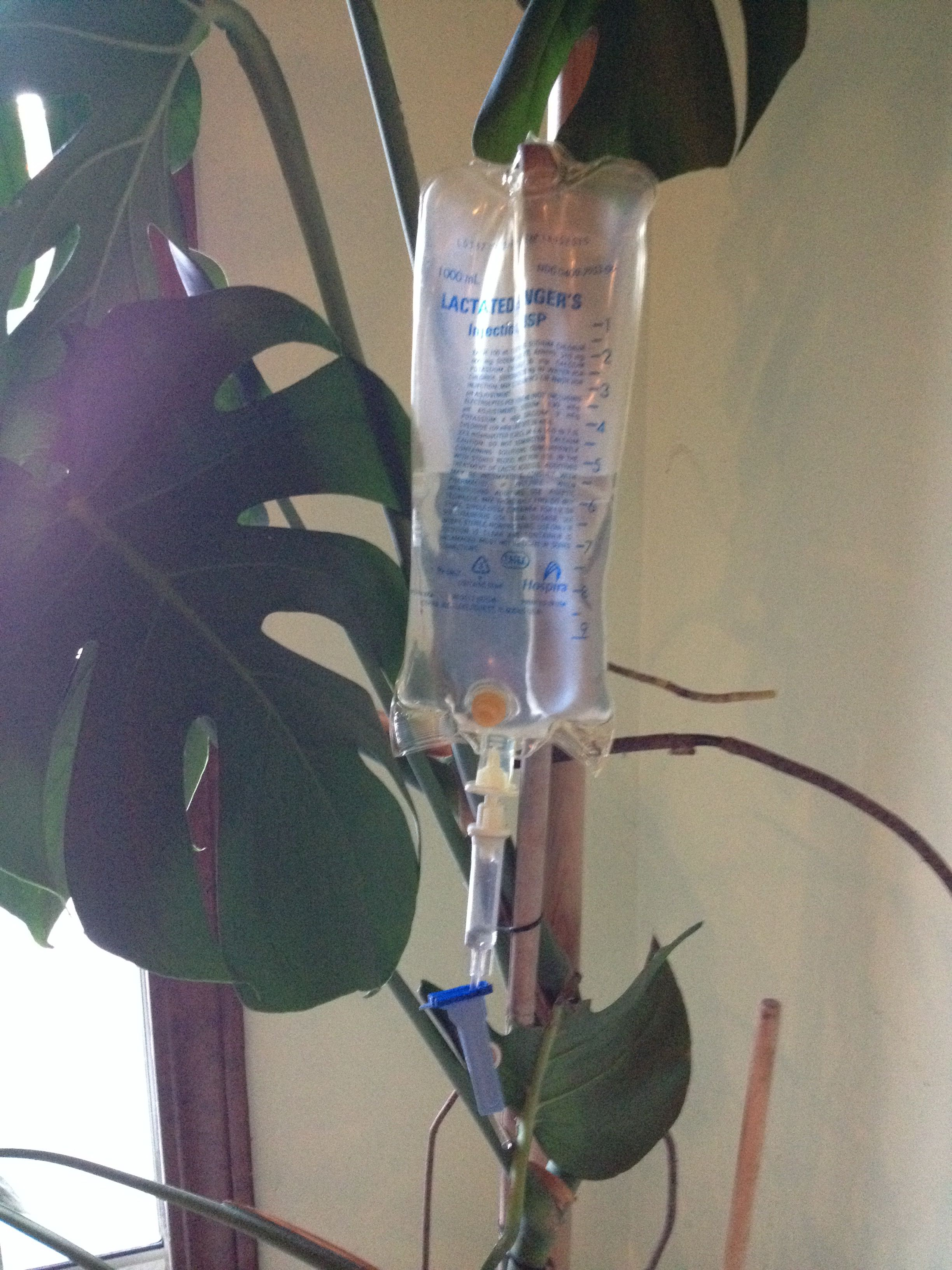 IV bag to water my plant overtime