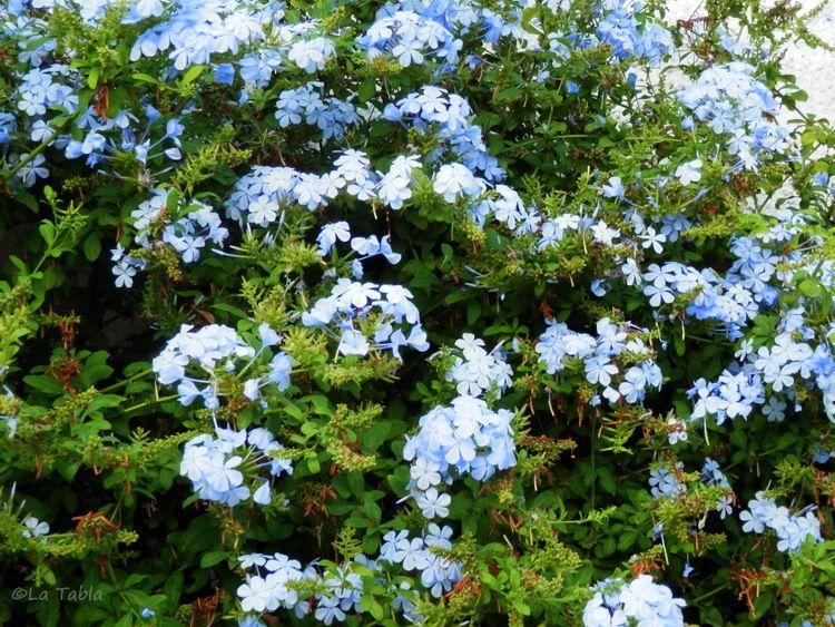 el blog de la tabla plantas jardin mediterraneo plantas