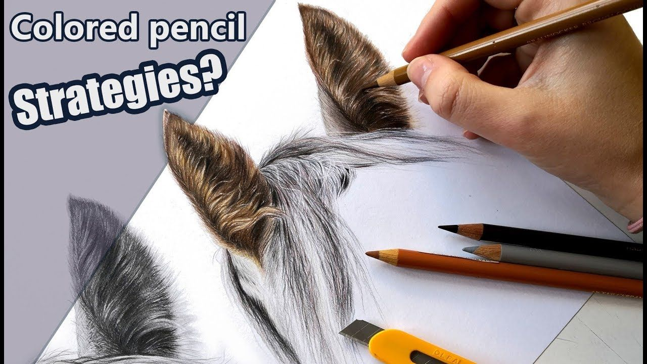 My colored pencil strategies horse ear tutorial youtube