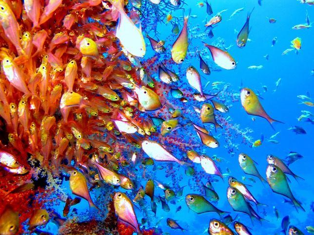 A világóceán mágikus ékköve: a Vörös-tenger