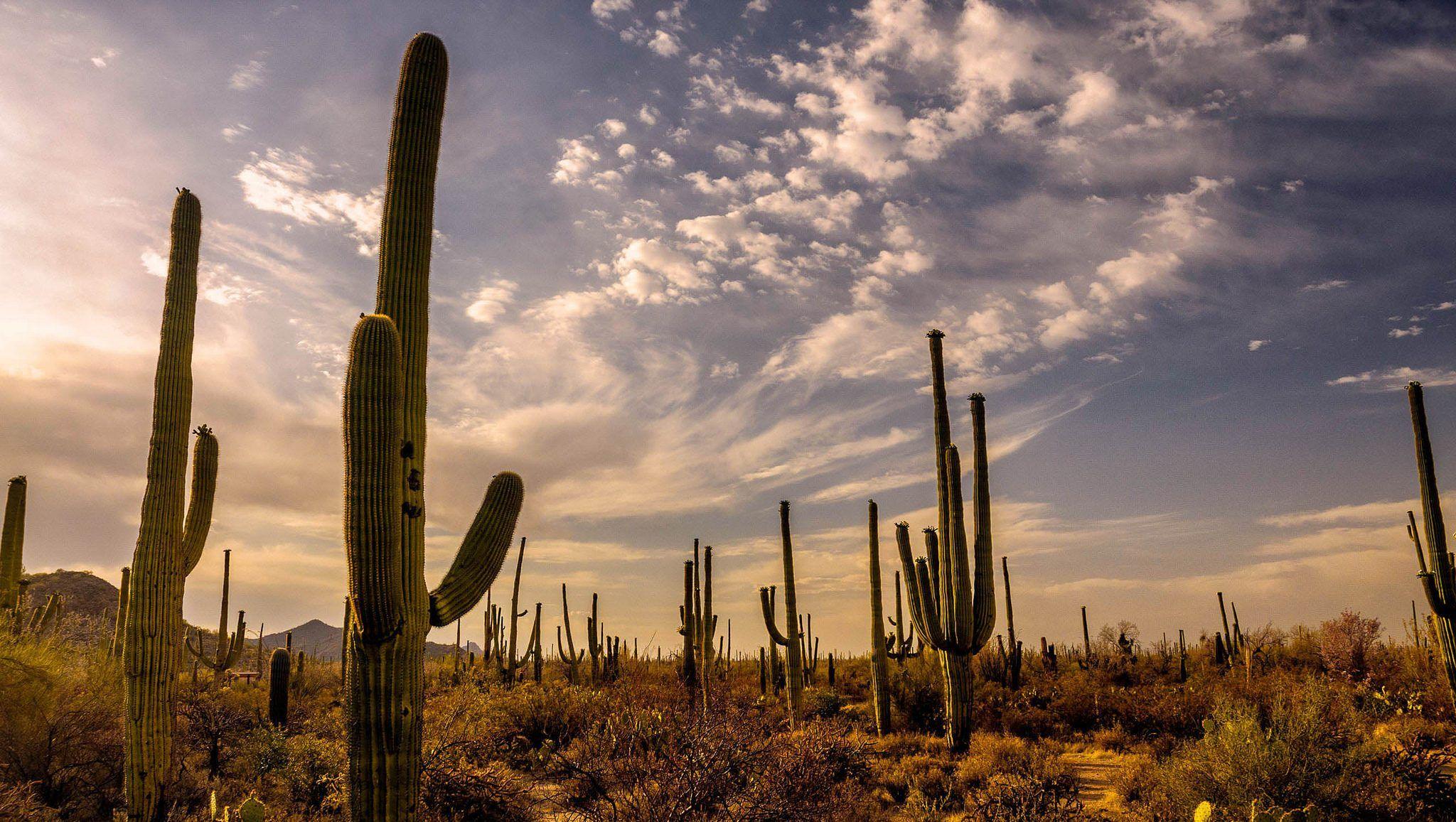 Nearly 2 Million Cacti Grow In Arizona S Unique Saguaro National Park Arizona National Parks Sonoran Desert National Parks