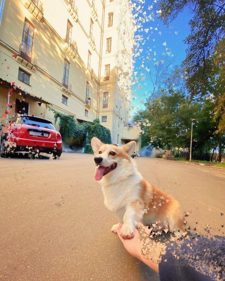"Mr. Chups 🍭 on Instagram: ""#ChupsCorgi #dog #instapuppy #petstagram  #ilovemydog #puppies #smile  #corgi #corgisofinstagram #corgipembroke #funnyanimals #funnydog…"""