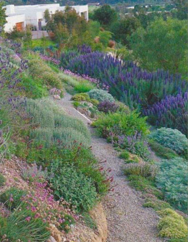 Lavender For Hillside Ground Cover Sloped Garden Backyard Landscaping Sloped Backyard