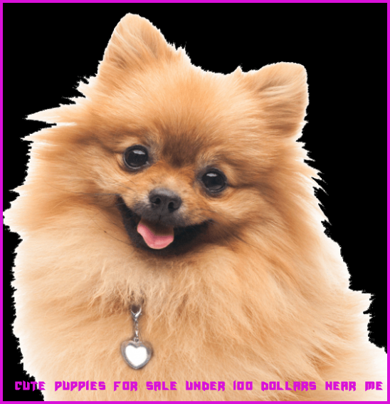 10 Great Cute Puppies For Sale Under 10 Dollars Near Me Ideas That You Can Share With Your Friends Cute P Cute Puppies For Sale Cute Puppies Puppies For Sale
