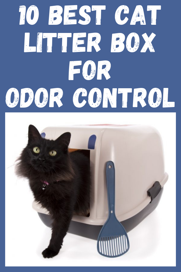 10 Best Cat Litter Box For Odor Control 2020 Best Cat Litter Cat Litter Cat Litter Box