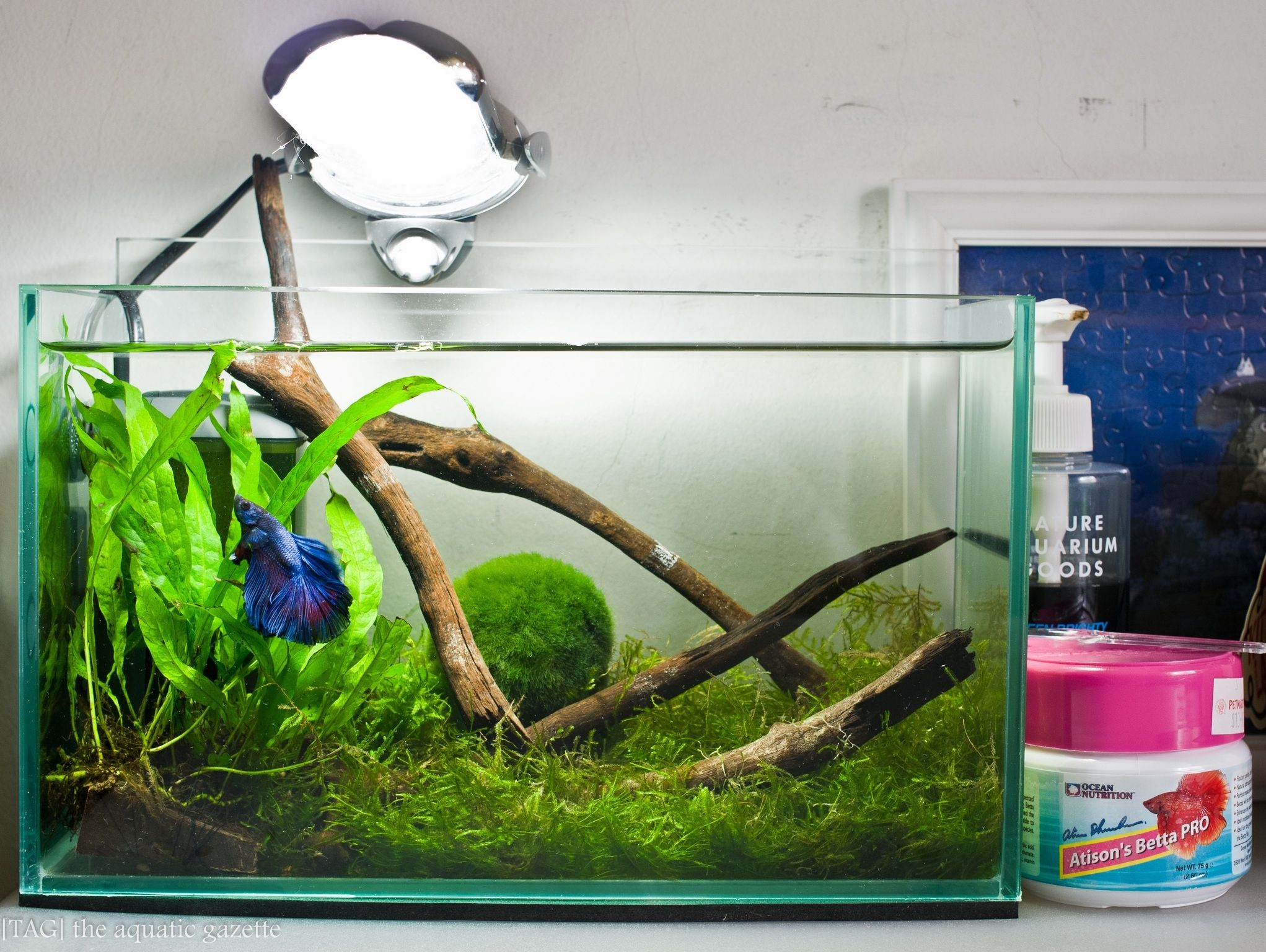 Fish aquarium is good in home - So Much More Beautiful Than A Small Dirty Bowl All Those Plants Help Keep His