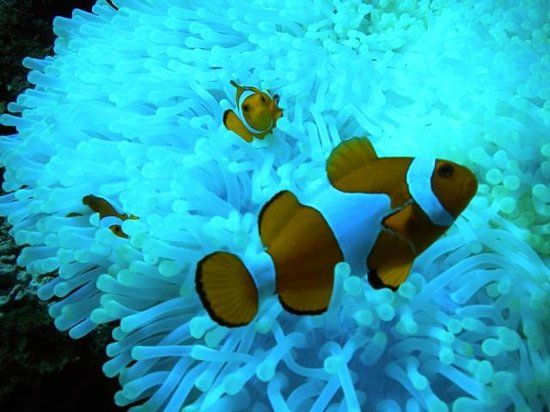 flores rarissimas fotos - Pesquisa Google