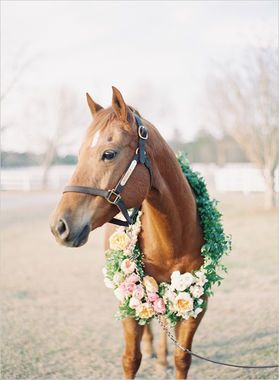 Could this BE any more beautiful?? Love the idea to include your horse in your wedding!