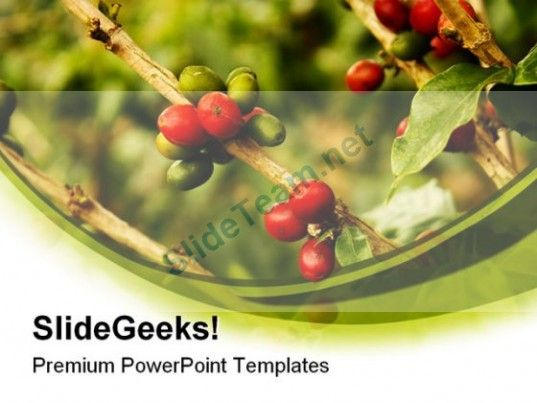 Coffee Plants Nature PowerPoint Templates And PowerPoint - nature powerpoint template