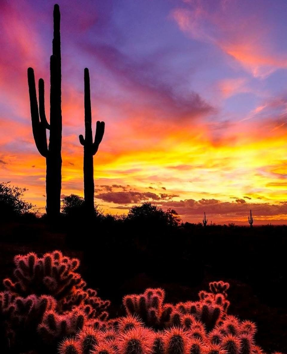 Beautiful Sunset Desert Sunset Desert Pictures Arizona Sunset Hd wallpaper cacti evening sunset desert