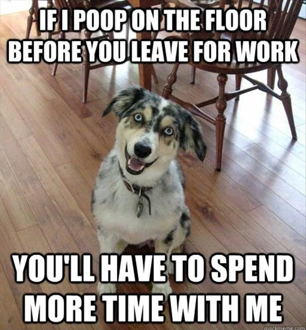 Funny Dog Poops On The Floor So You Ll Spend More Time With Him