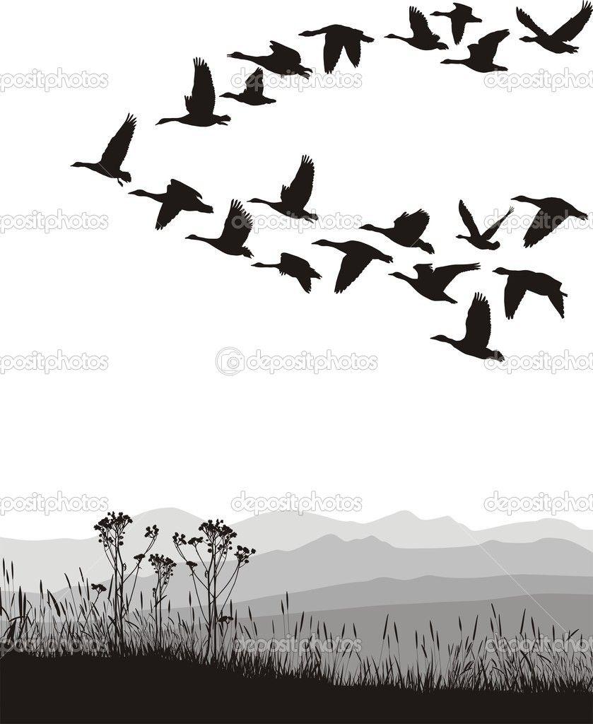 Zwart Wit Afbeelding Van De Vliegende Ganzen Vliegende Ganzen Zwart Wit Vliegende Vogels