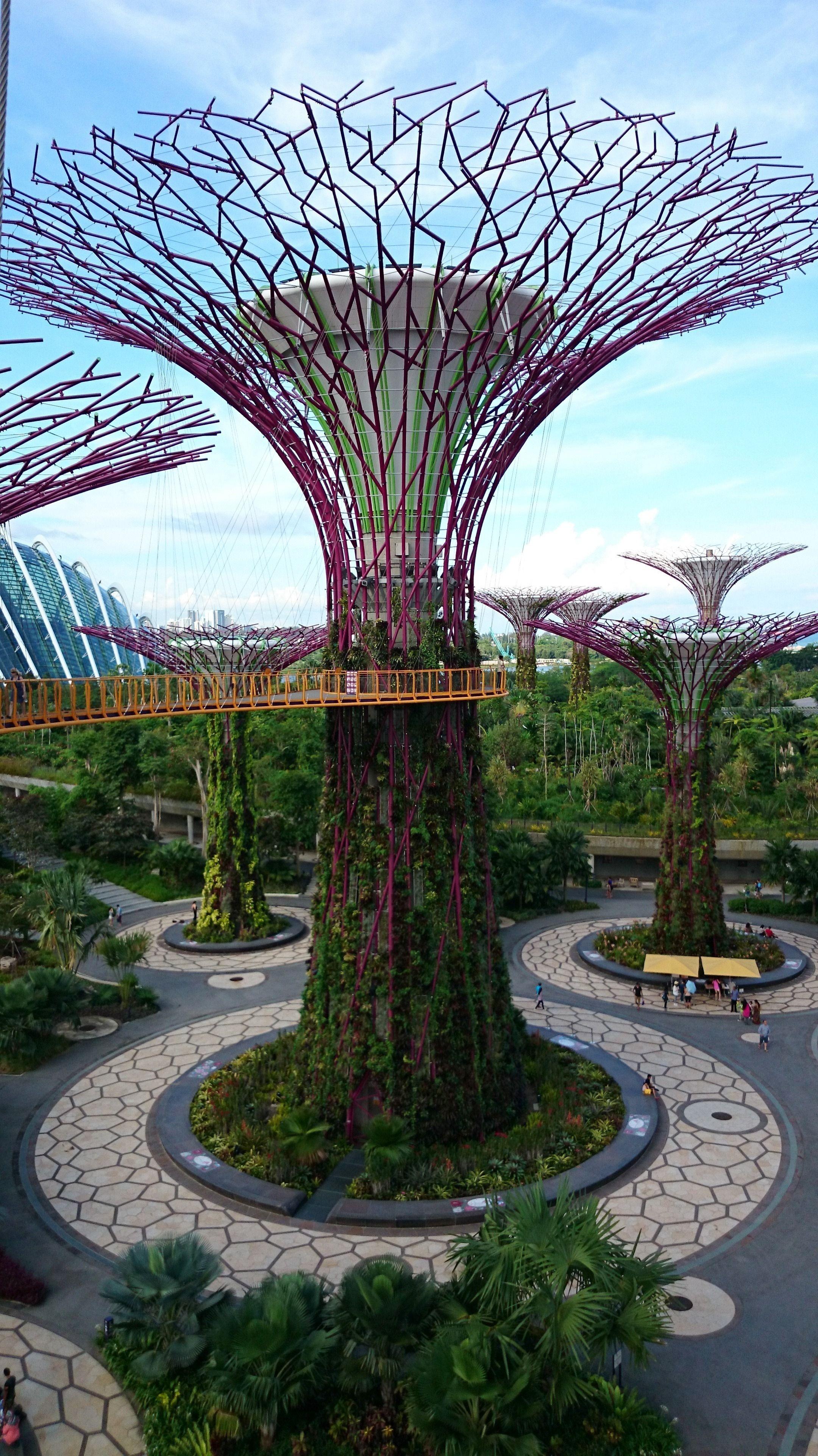 Gardens By The Bay Super Trees Grove Skyway Singapore Visions Of Travel Singapore Garden Garden Design Garden Patio Furniture