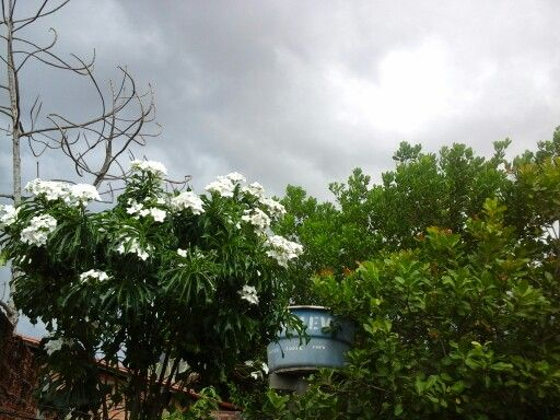 Hoje o céu está tão lindo vai chover.......