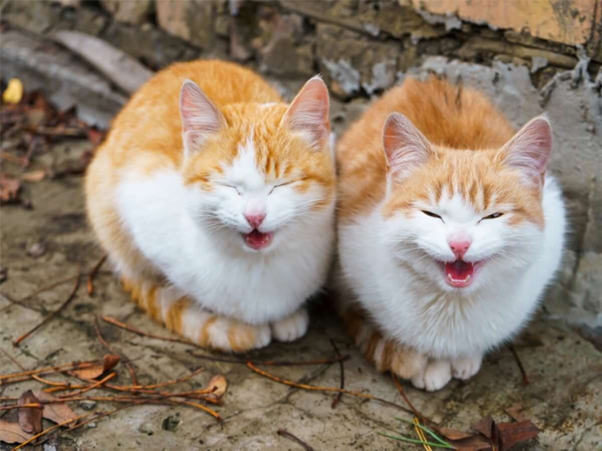 Some Facts About Cats Talking To Each Other Cute Cats Cat Behavior Cat Talk