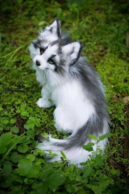 Canadian marble fox Baby animals, Baby animals funny