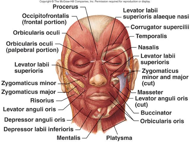 face skin diagram wiring diagram Epidermis Diagram cutaneous lip diagram facialmuscles lateral view facial muscles