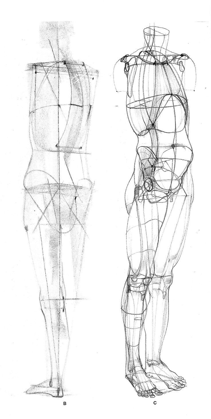 Pin by marcus balchin on Figure drawing | Pinterest | Anatomy ...