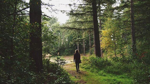 Imagem gratis no Pixabay - Homem, Andar, Viagem, Floresta, Pé