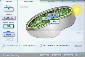 Screenshot Of Cell Energy Cycle Gizmo Homeschool Science Lesson Gizmo