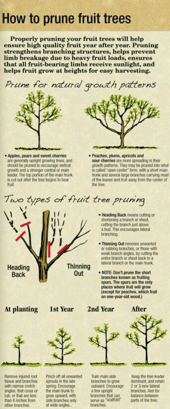 Pin By Heather Zaragoza On Garden Idea S And Crafts Pruning Fruit Trees Backyard Trees Landscaping Fruit Garden