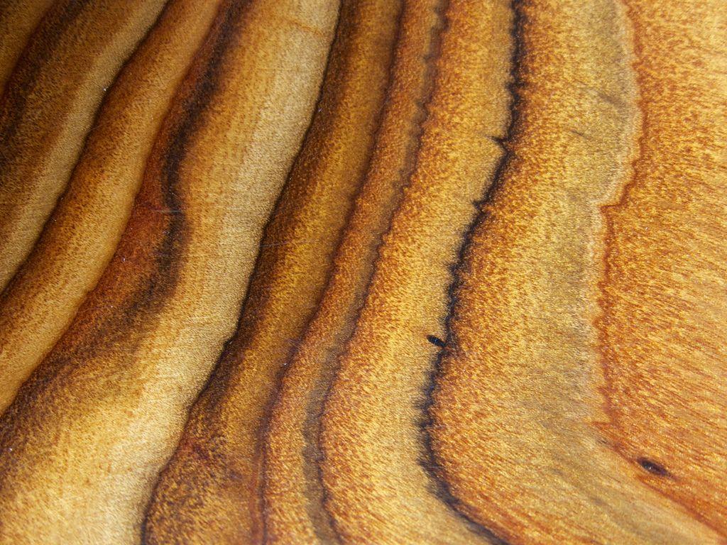 8735837935_8fc3748560_b.jpg (1024×768) Staghorn Sumac Wood Grain ...