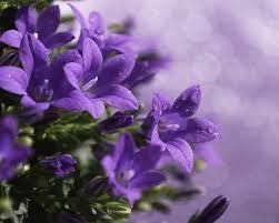 Image Result For ورد بنفسجي خلفيات Purple Flower Background Purple Flowers Light Purple Flowers