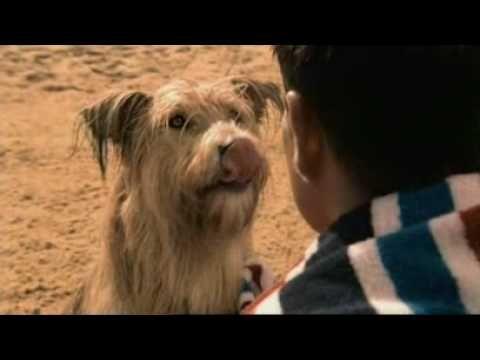 Beneful Prepared Meals Dog Food Tv Commerical Tv Food Dog Food