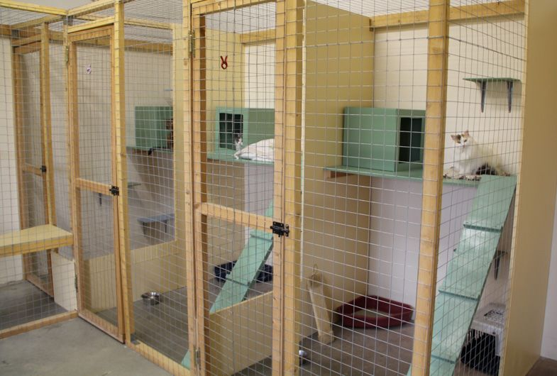 Img 9558 Cat Kennel Cat Hotel Cat Room