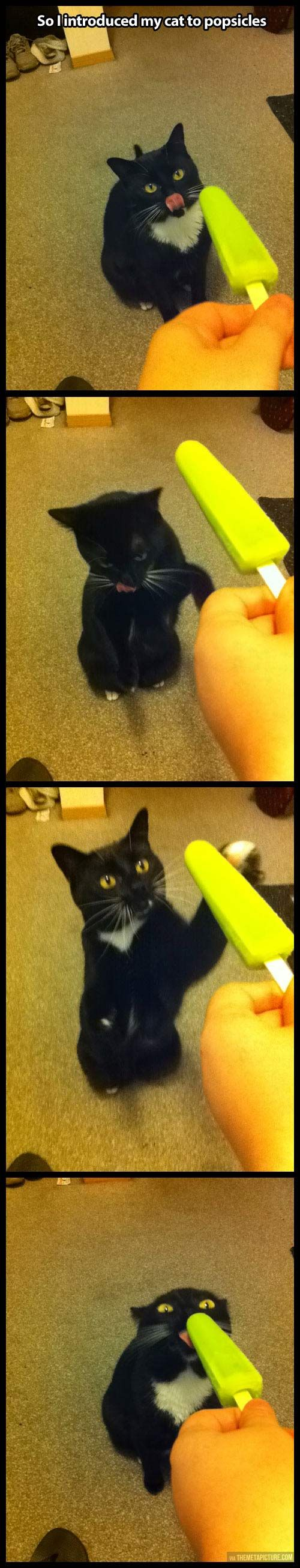Introduced my cat to popsicles...