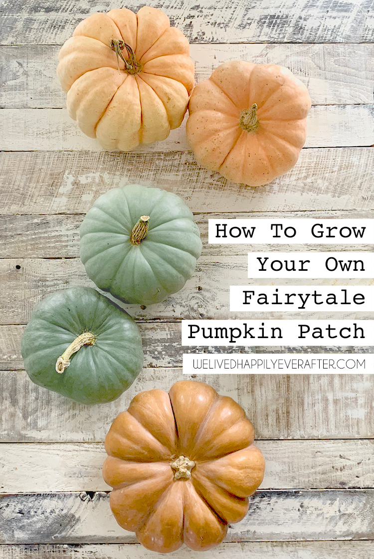 How To Grow Heirloom Fairytale Pumpkins From Seed (DIY Pumpkin Patch!) How To Hand Pollinate A Pumpkin Plant, How To Harvest, Care For And Clean Pumpkins To Make Them Last | We Lived Happily Ever After